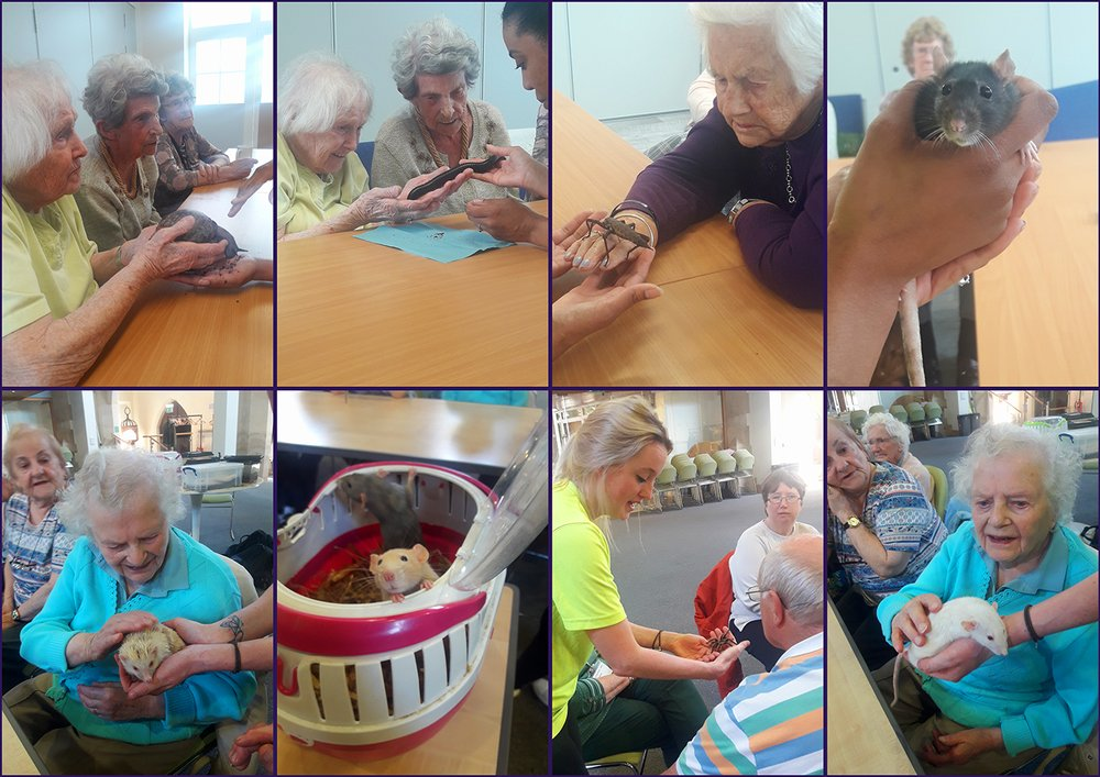A collage of 8 images. Older people with a snake, giant sail, millipede, albino hedgehog and rats, and a tarantual